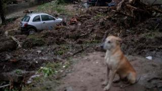 A dog sits near a damaged car after heavy rains in the Taquara neighbourhood, suburbs of Rio de Janeiro, Brazil. Photo: 2 March 2020